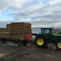 Delivering straw to a weardale farm
